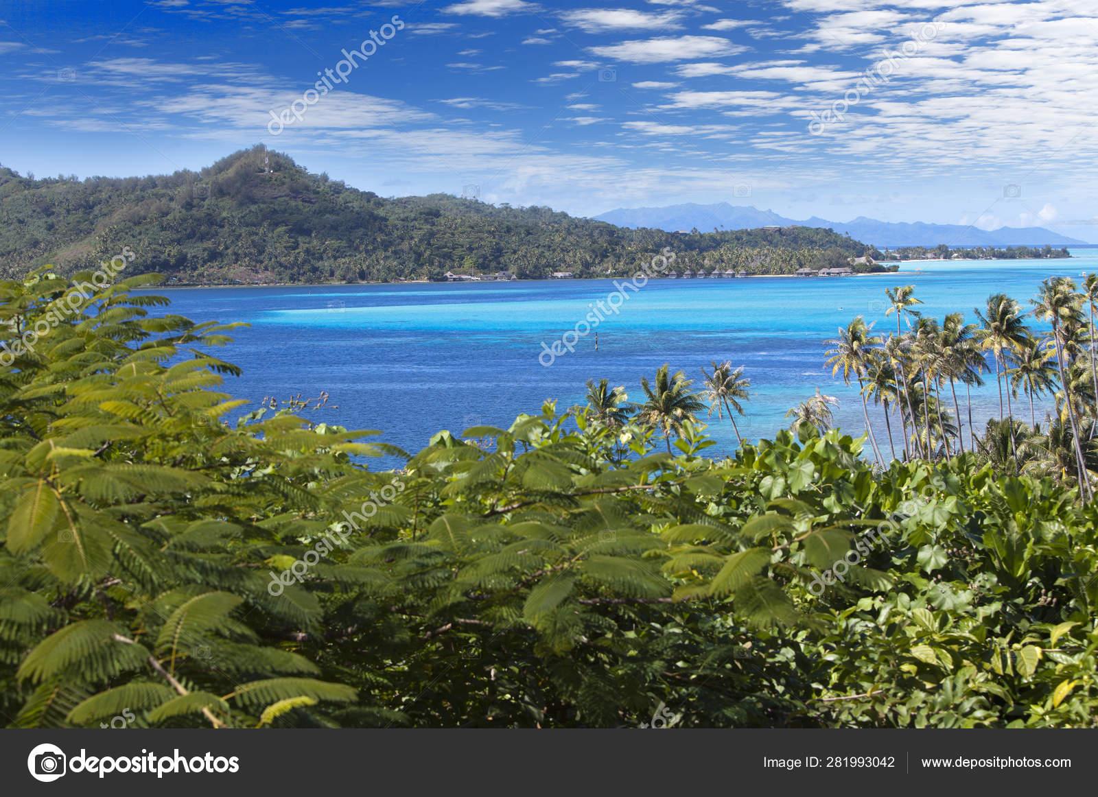 Blue Lagoon Bora Bora Island Polynesia Top View Palm Trees