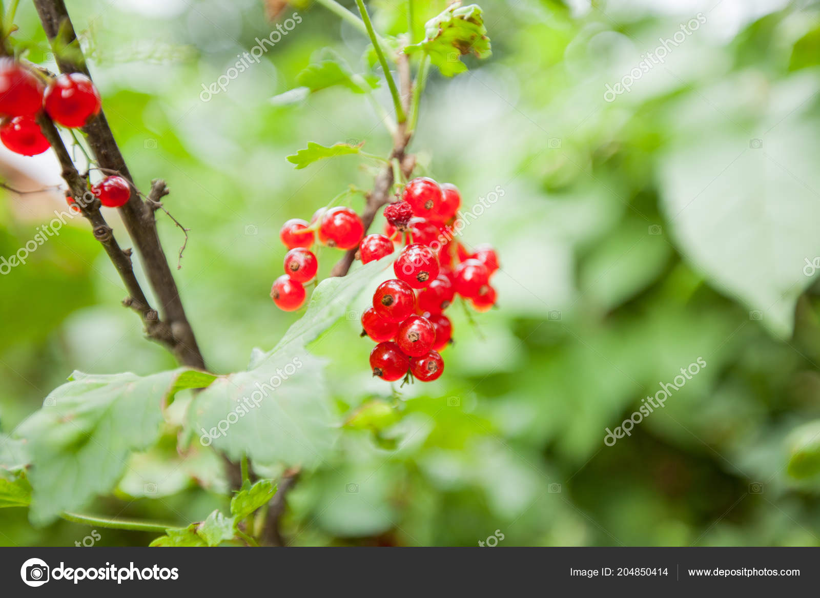Cranberry Branch Pictures