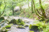 Přírodní krajina v létě ráno potoku