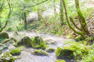 """Картина, постер, плакат, фотообои """"лесной ручей природный ландшафт летом утром печать картины"""", артикул 211805762"""