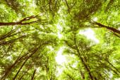Tavaszi zöld erdő, kilátás, gyönyörű természet táj.