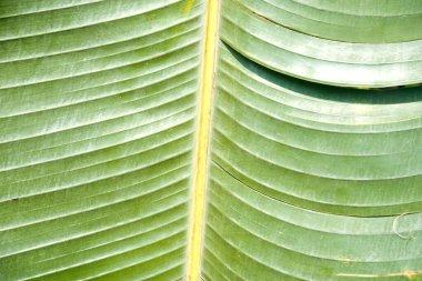 Palm leaf as background