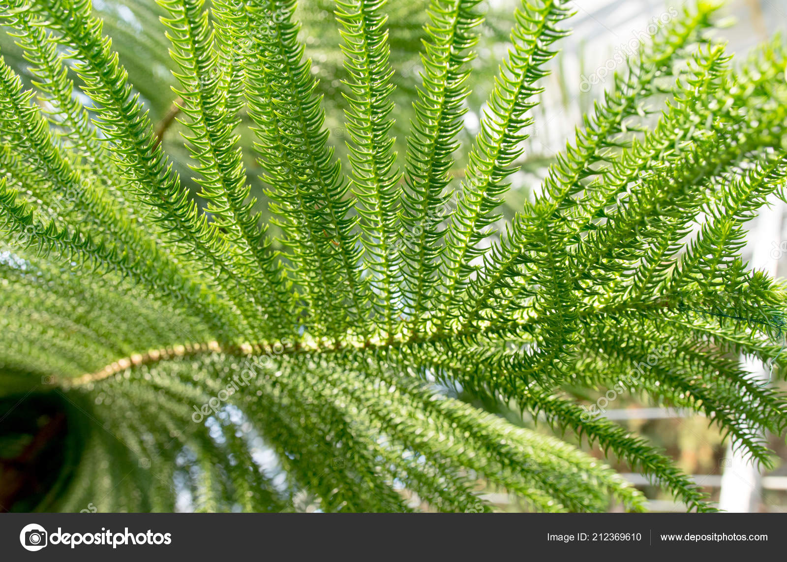 Green Tropical Plants Forest Background — Stock Photo © kzwwsko