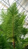 zelené tropické rostliny, lesní pozadí