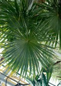 green tropical plants, forest background
