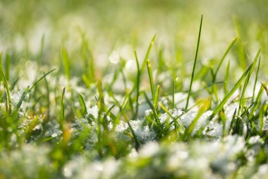 green grass snow blurred background bokeh