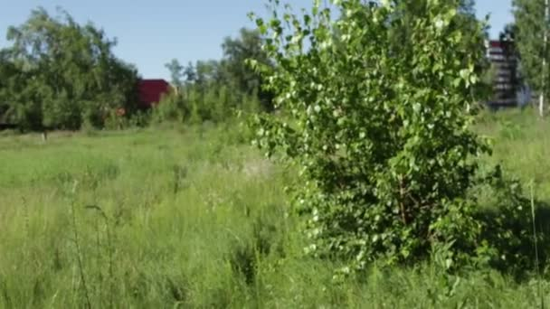 green bushes in the summer field