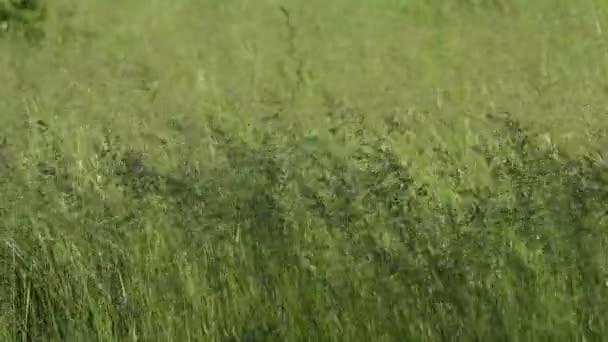 Zöld fű területén