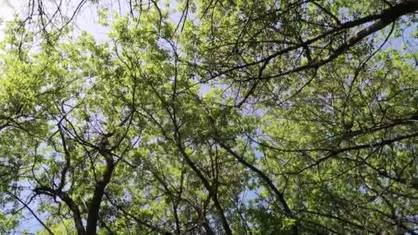 fák az erdőben kék eget a háttérben
