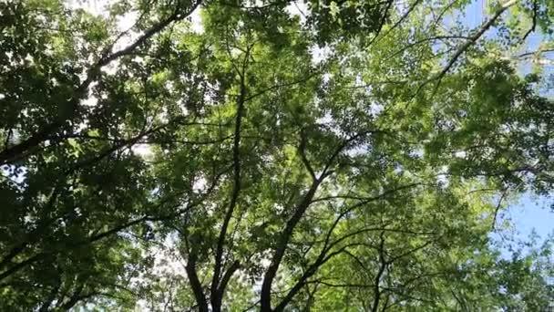 stromy v lese s modrou oblohou na pozadí