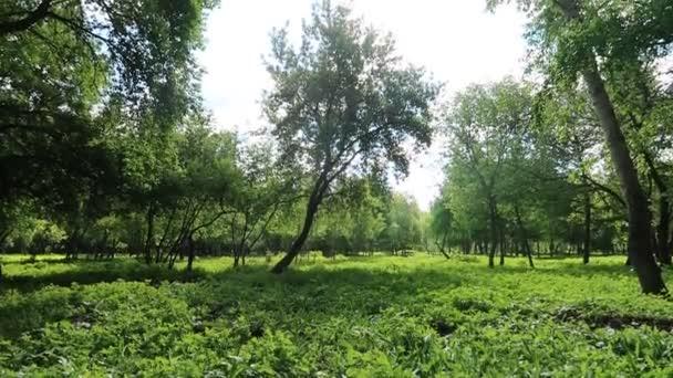 Fák a nyári erdőben
