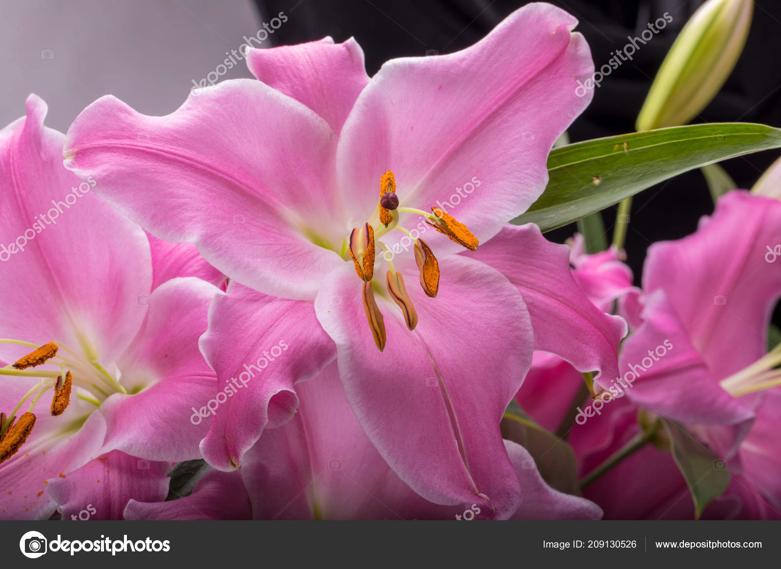Pink Lily Flower Names Flowers Healthy