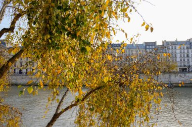 Paris in Autumn. The sun lights the river Seine, the turned yellow trees ashore and beautiful houses which make an architectural complex of the embankment