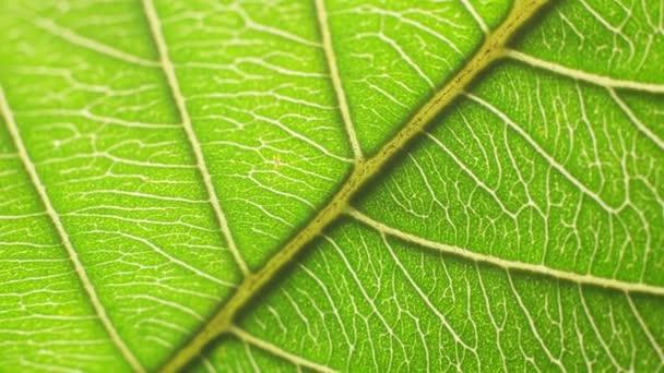 közel a zöld levél a természetben