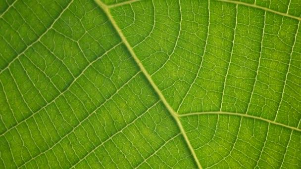A zöld leveles