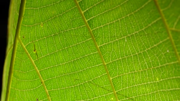 Macro shot of green leafs and plants been analyzed