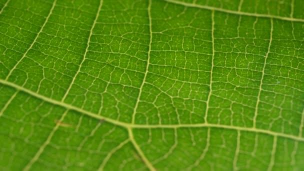 Makroaufnahme grüner Blätter und Pflanzen analysiert