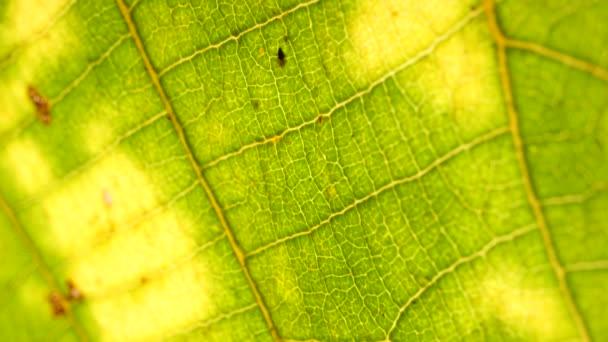 Makro lövés a zöld levelek, és a növények nem elemzett