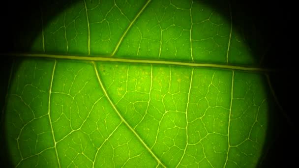 Zelené rostliny a zelený list v makru