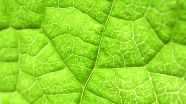 Nahaufnahme eines grünen Blattes in der Natur
