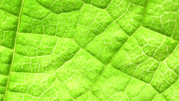 Close up of a Green leaf in nature