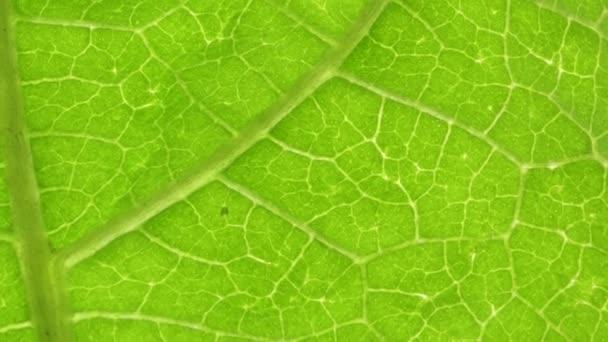 zblízka zeleného listu v přírodě