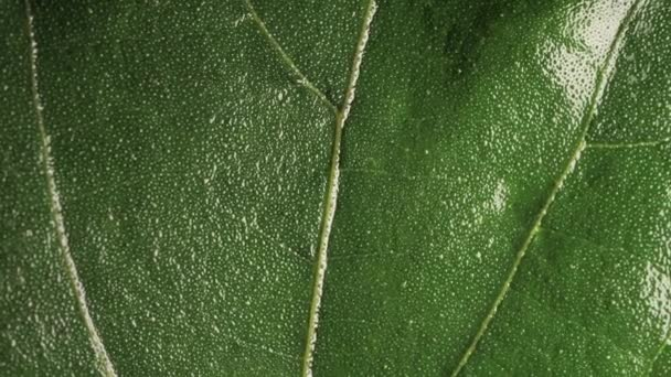 Green Plants and green leafs in macro