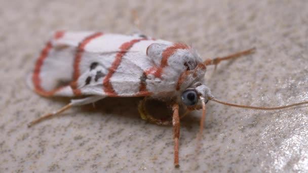 Közelről egy rovar lepke