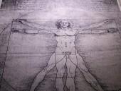 Photo Anatomy Art Drawing