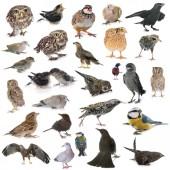 vadon élő madarak csoportja fehér háttér előtt