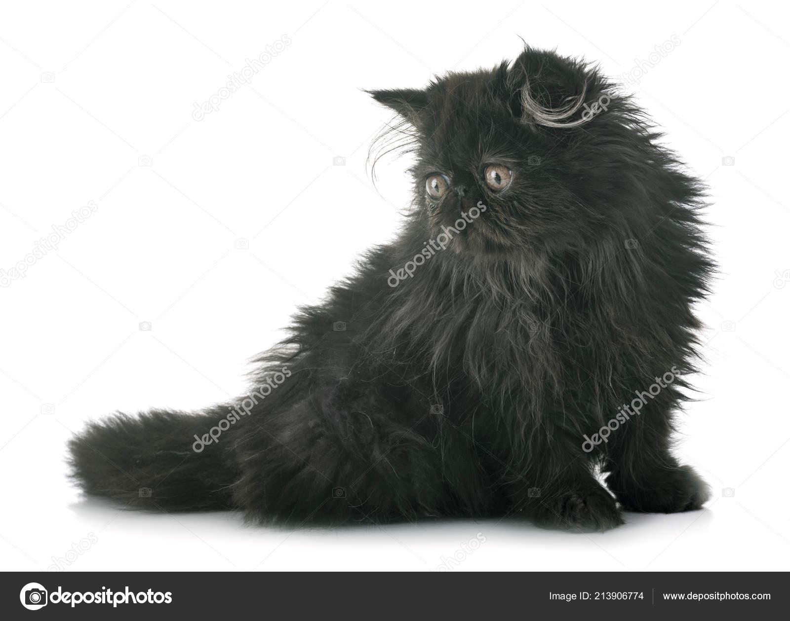Nabídka černá kočička