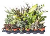 Fotografia piante in vaso davanti a sfondo bianco