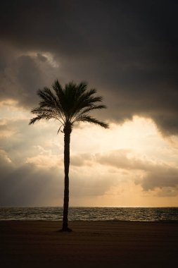 Storm clouds threatening dangerous weather on the coast, palm silhouette