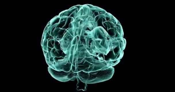 Human Brain X-Ray Render