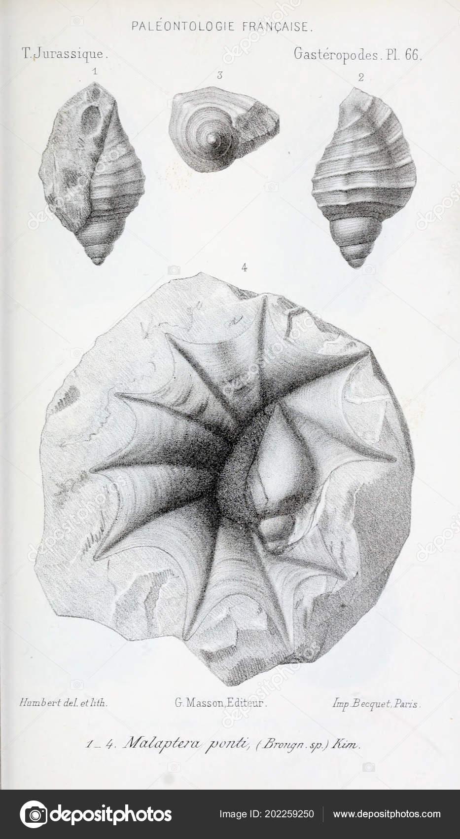 εξέλιξη των απολιθωμάτων
