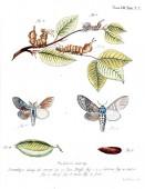 Ilustrace motýlů. Starý obrázek