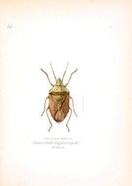 Illustration of insects. Old image
