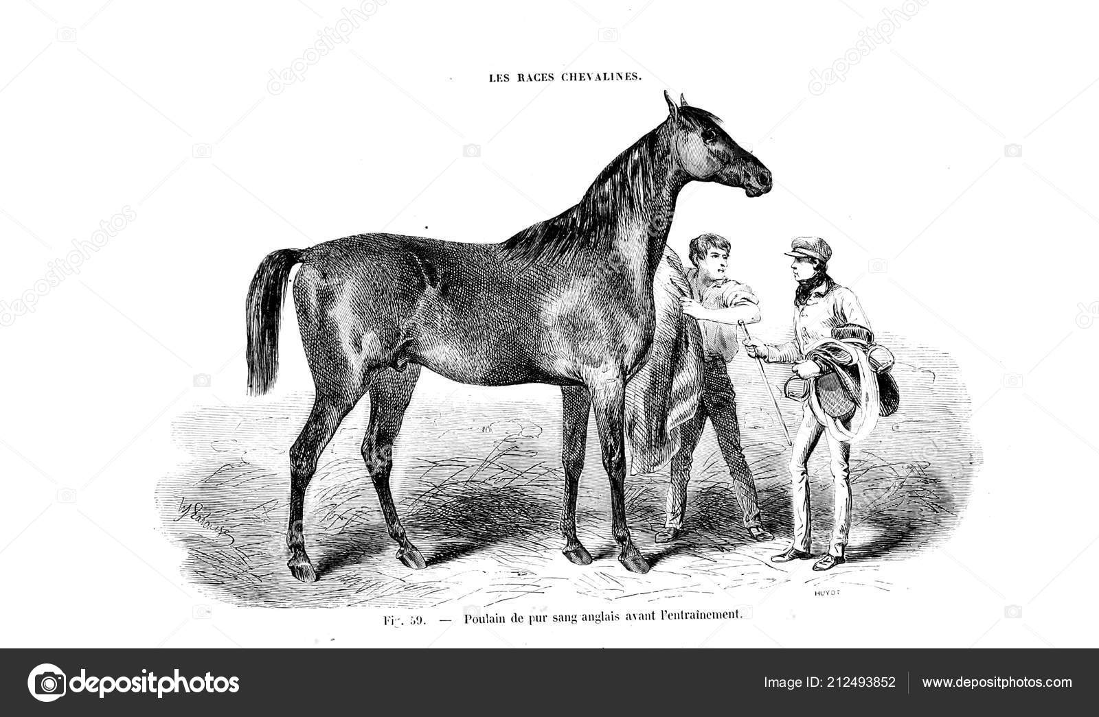 Illustration Horse Old Image Stock Photo C Ruskpp 212493852