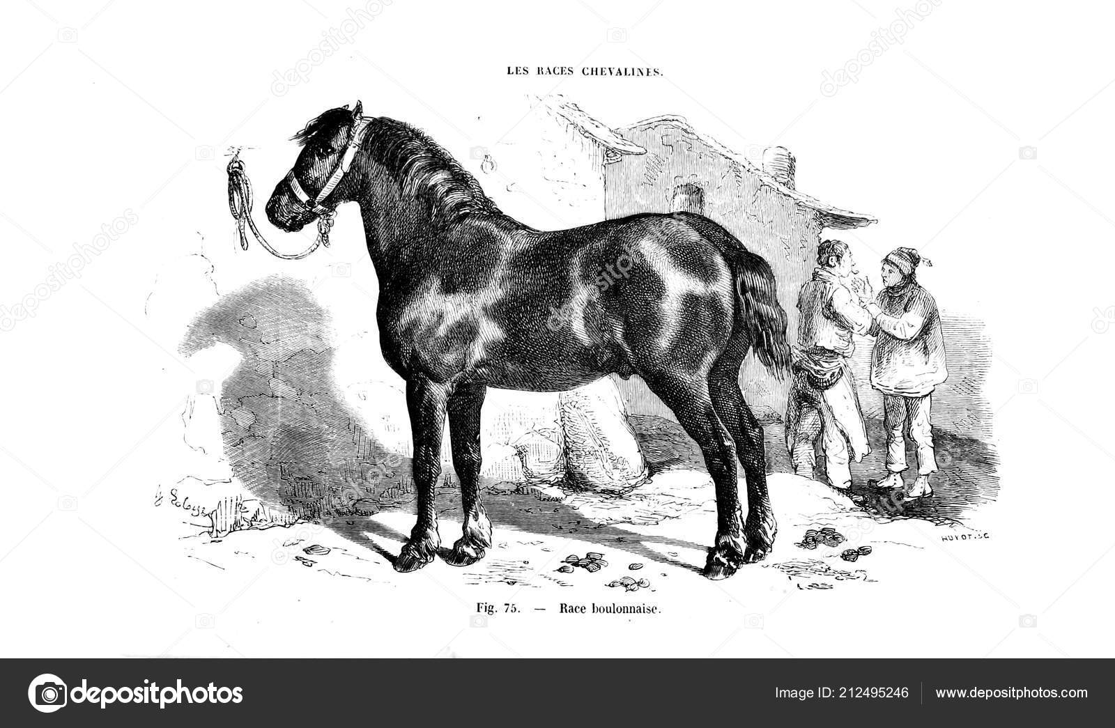 Illustration Horse Old Image Stock Photo C Ruskpp 212495246