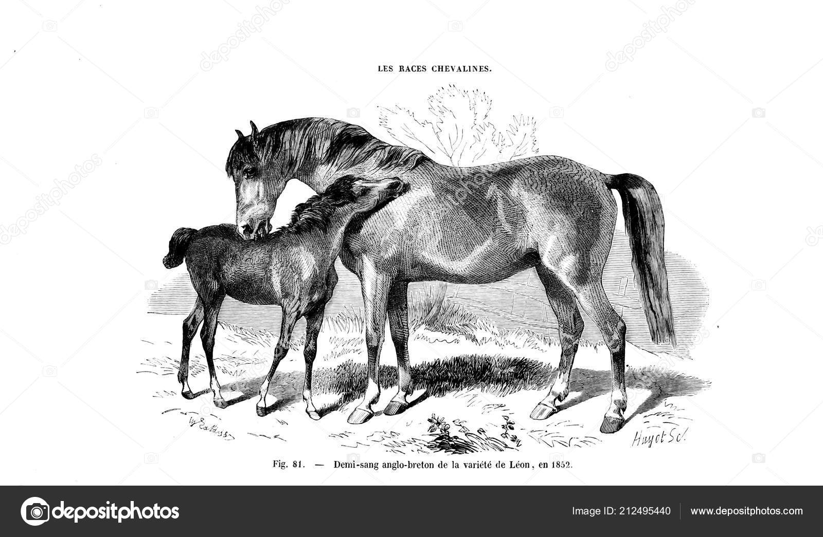 Illustration Horse Old Image Stock Photo C Ruskpp 212495440
