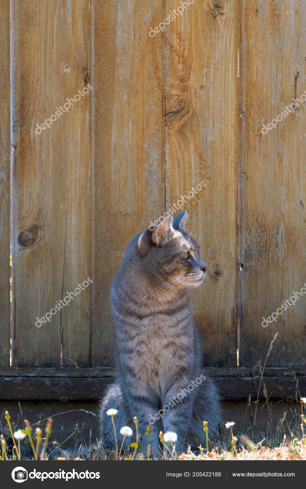 Recinzione Giardino Per Gatti.Gatto Tabby Grigio Seduto Dalla Recinzione Giardino Guardando