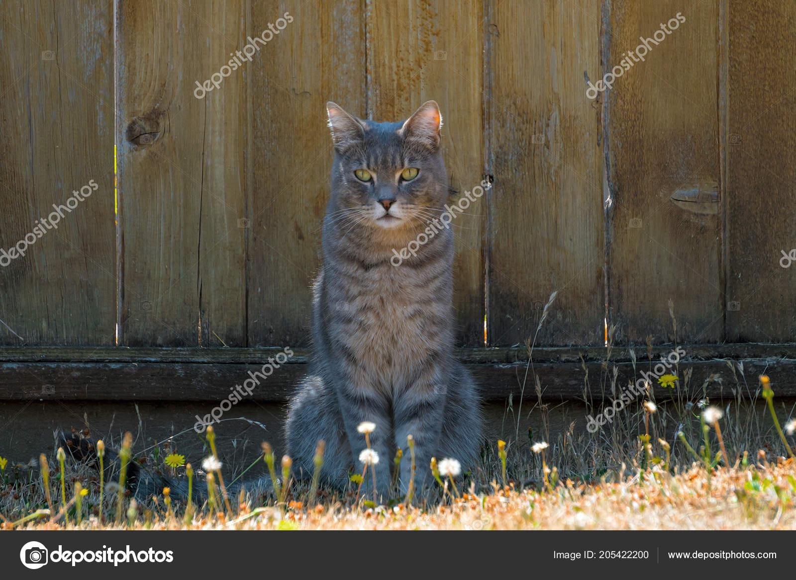 Recinzione Giardino Per Gatti.Gatto Tabby Grigio Seduto Dalla Recinzione Giardino Foto Stock