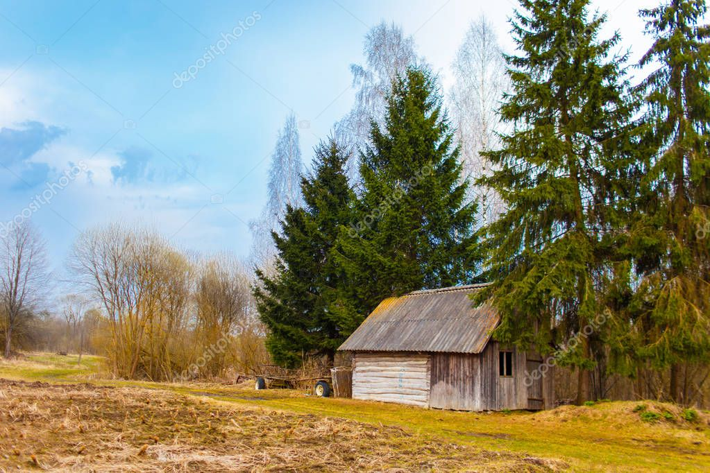 Old wooden shed among firtrees and birches. Belarusian springtime in the countryside. Blues sky in the background. Cold Belarusian spring in the rural area