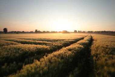 Sunrise over a field of wheat stock vector