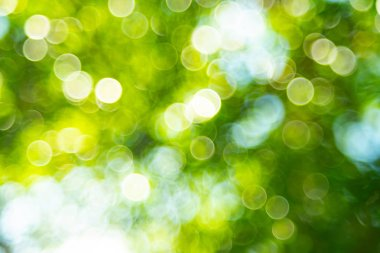 Green bokeh out of focus background from nature stock vector