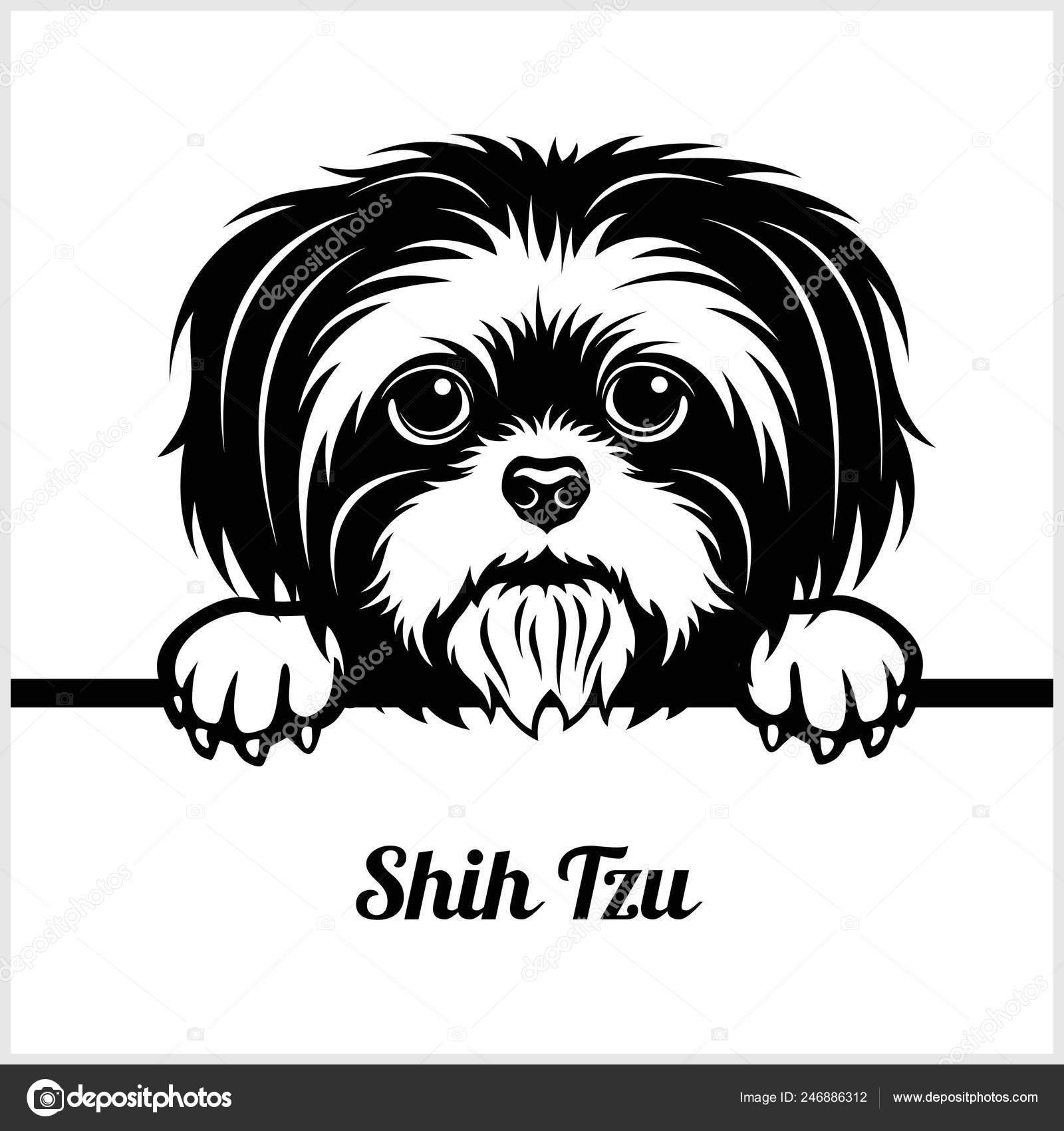 Pics Shih Tzu Shih Tzu Peeking Dogs Breed Face Head