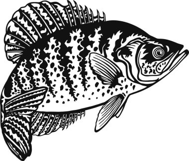 Download Crappie Bass Free Vector Eps Cdr Ai Svg Vector Illustration Graphic Art