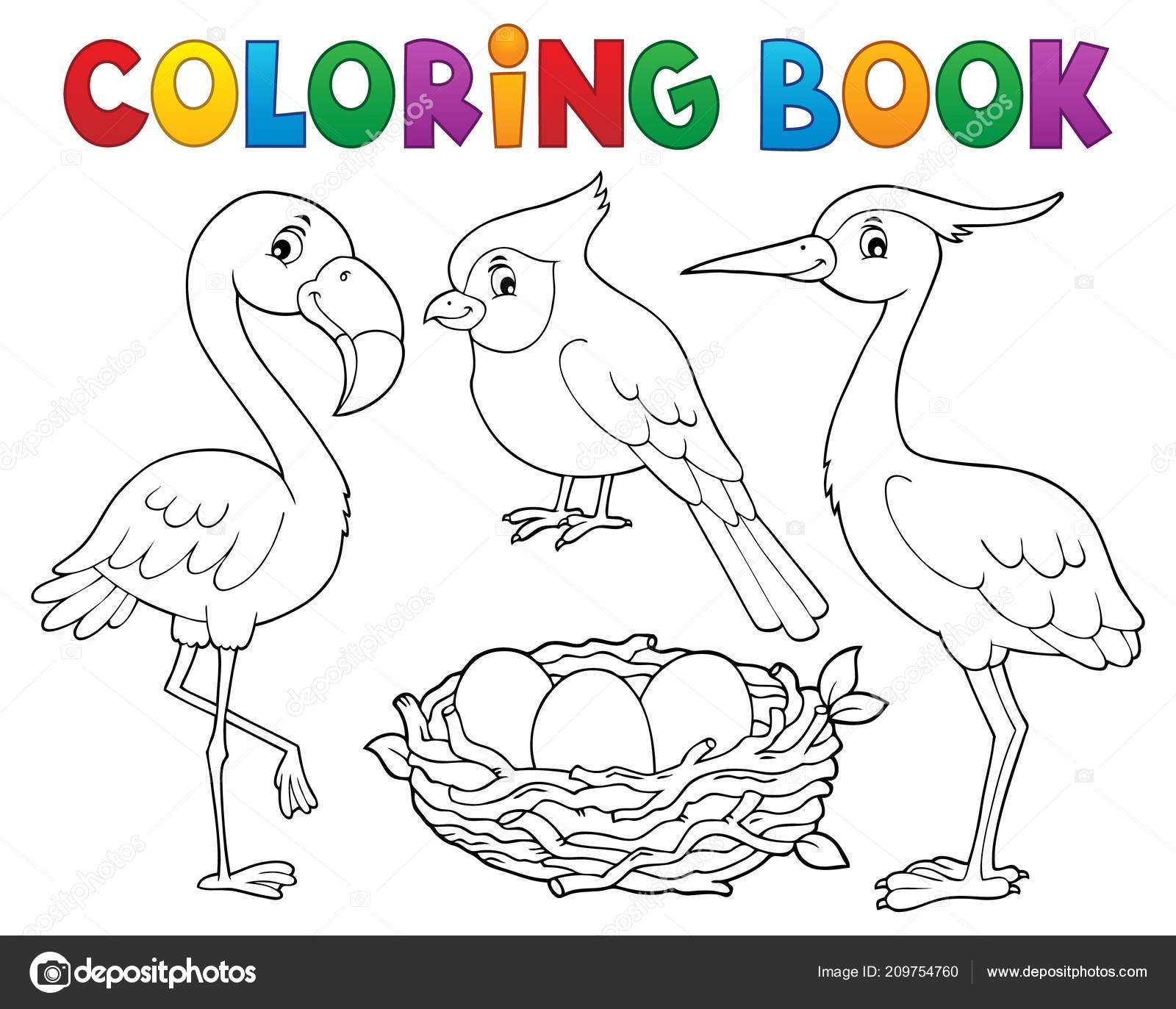 Coloring Book Bird Topic Eps10 Vector Illustration Stock Vector C Clairev 209754760