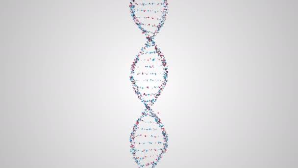 DNS lánc szerkezetének adatok