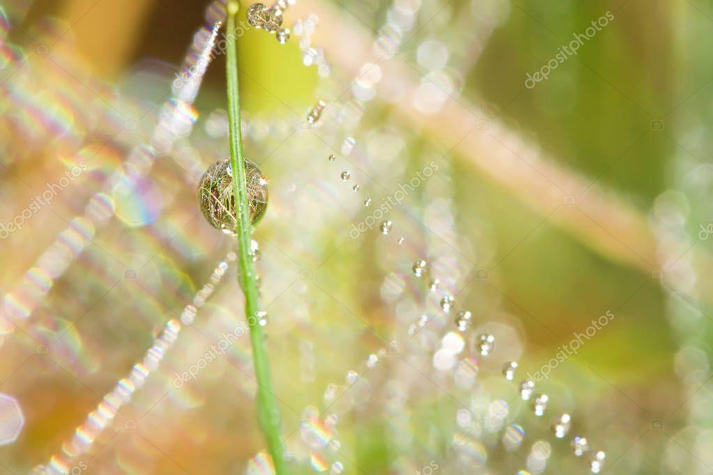 Pure drops of dew. Spider's web.